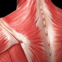 67. Fysioterapia